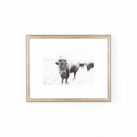 Pewter silver frame with buffalo photo black and white on white wall